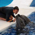 Delphin 1