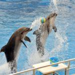Delphin 2